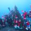 「12/22-23 ブルークリスマスFD」サムネイル